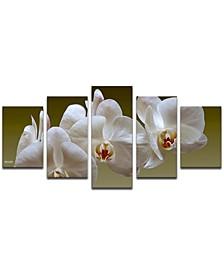 'White Orchid' 5-Pc. Canvas Art Print Set