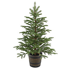 National Tree Company 4' Feel Real(R) PE Norwegian Spruce Entrance Trees in Wiskey Barrel Pot