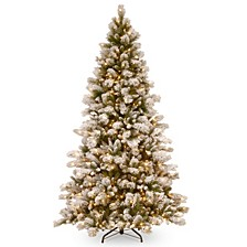 National Tree Snowy Westwood Pine with 650 Clear Lights