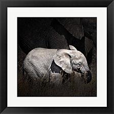 Baby Elephant II by Golie Miamee Framed Art