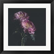 Dark Florals by Sarah Gardner Framed Art