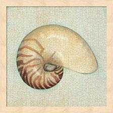 Coastal Treasures Iii By Josefina Framed Art