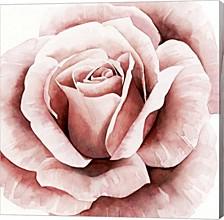 Pink Rose Ii By Grace Popp Canvas Art