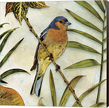 Jungle Bird II by Edward Selkirk Canvas Art