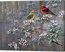 Scarlet Revelry by Wanda Mumm Canvas Art