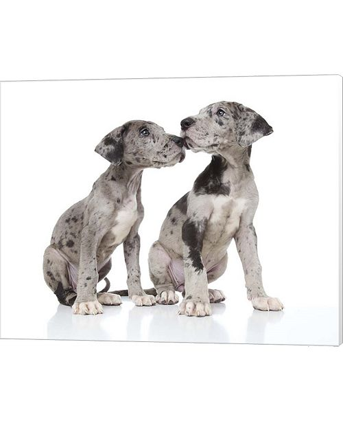 Metaverse Puppies 4 By Andrea Mascitti Canvas Art