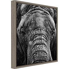 Amanti Art Elephant by Giovanni Casini Canvas Framed Art