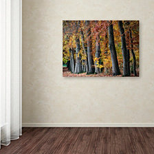 Cora Niele 'Autumn Beeches I' Canvas Art