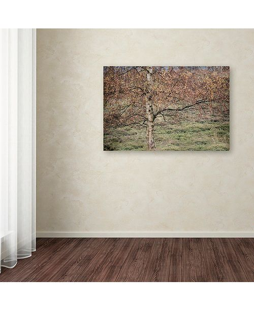 "Trademark Global Cora Niele 'Birch' Canvas Art, 12"" x 19"""
