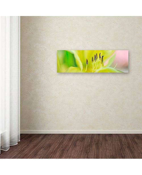 """Trademark Global Cora Niele 'Day Lily Scape' Canvas Art, 8"""" x 24"""""""
