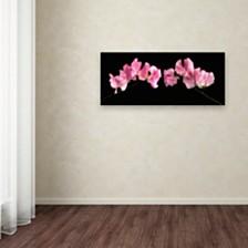 "Cora Niele 'Glowing Sweet Peas' Canvas Art, 10"" x 24"""