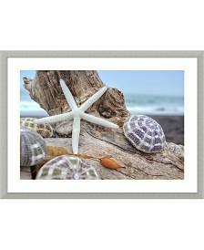 Amanti Art Rodeo Beach Shells 7  Framed Art Print