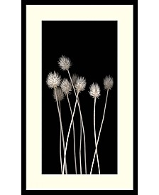 Amanti Art Dried Up  Framed Art Print