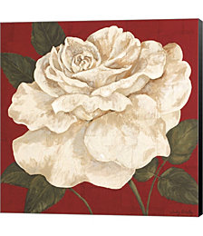 Rosa Blanca Grande II by Judy Shelby Canvas Art