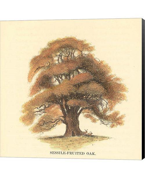 Metaverse Sessile-Fruited Oak by Samuel Williams Canvas Art