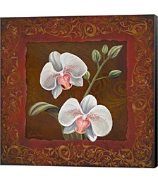 Orchid Study II by Rosiland Solomon Canvas Art