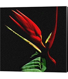 Flower Design by Harold Silverman Canvas Art