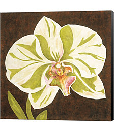 Surabaya Orchid Petites A by Judy Shelby Canvas Art