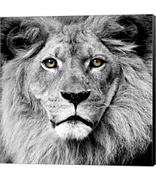 Lion by PhotoINC Studio Canvas Art