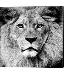 Lion by PhotoINC Studio Canvas Art