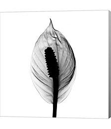 Spathyphyllum X-Ray by Bert Myers Canvas Art