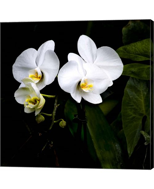 Metaverse Orchids and Leaves by Harold Silverman Canvas Art