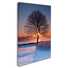 "Michael Blanchette Photography 'Sun In Tree' Canvas Art, 12"" x 19"""