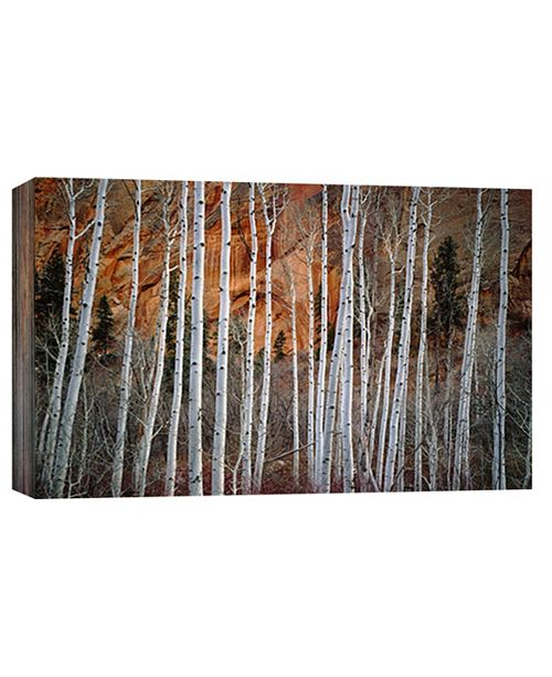 PTM Images Aspen Decorative Canvas Wall Art