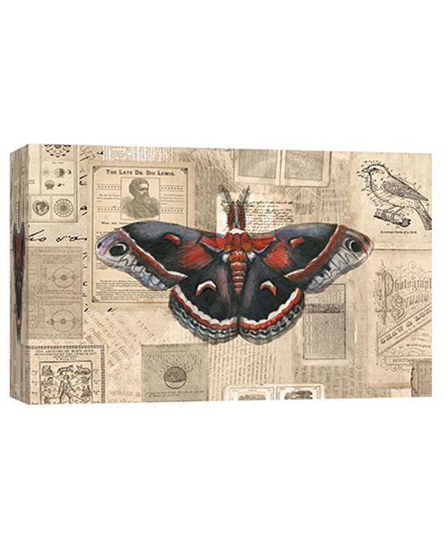 PTM Images Moth Illustration Decorative Canvas Wall Art