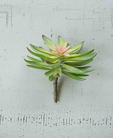 Flower Succulent, Bundle of 6