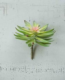 Kalalou Flower Succulent, Bundle of 6