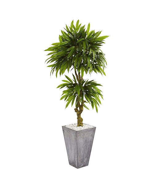 Nearly Natural 5.5' Mango Artificial Tree in Concrete Planter UV Resistant