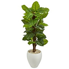 5' Large Leaf Philodendron Artificial Plant in White Oval Planter - Real Touch