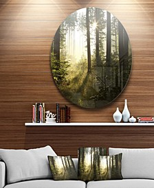 """Designart 'Early Morning Sun In Misty Forest' Landscape Photography Circle Metal Wall Art - 38"""" x 38"""""""