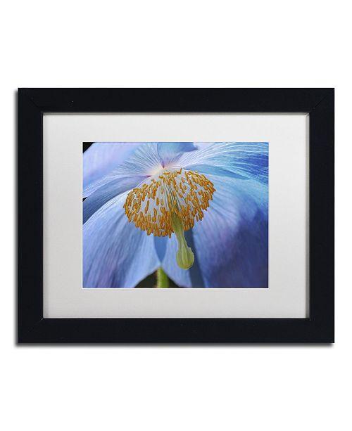 "Trademark Global Cora Niele 'Blue Poppy' Matted Framed Art - 11"" x 14"" x 0.5"""
