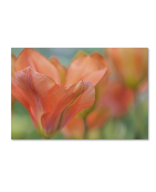 "Trademark Global Cora Niele 'Orange Wings Tulips' Canvas Art - 19"" x 12"" x 2"""