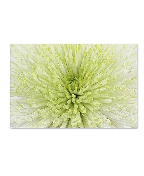 "Trademark Global Cora Niele 'Lime Light Spider Mum' Canvas Art - 47"" x 30"" x 2"""