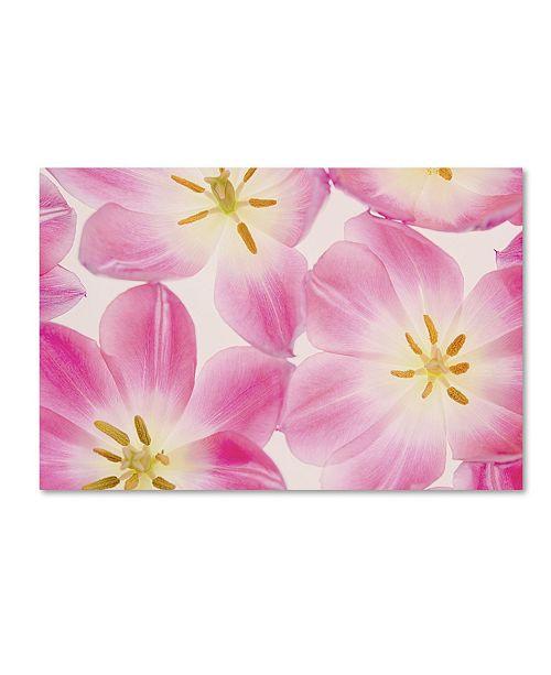 "Trademark Global Cora Niele 'Three Cerise Pink Tulips' Canvas Art - 19"" x 12"" x 2"""