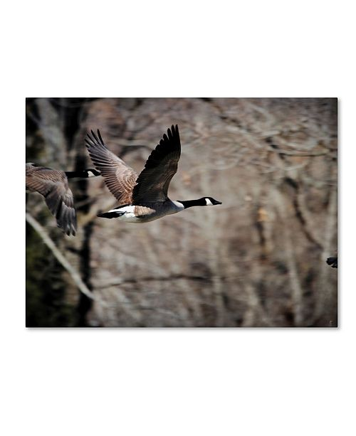 "Trademark Global Jai Johnson 'Canadian Goose In Flight 3' Canvas Art - 47"" x 35"" x 2"""
