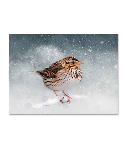 """Trademark Global Jai Johnson 'Snow Sparrow' Canvas Art - 32"""" x 24"""" x 2"""""""