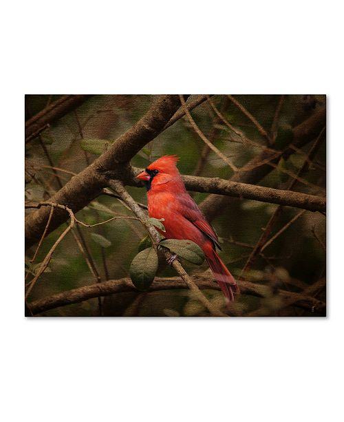 "Trademark Global Jai Johnson 'Song Of The Red Bird 1' Canvas Art - 19"" x 14"" x 2"""
