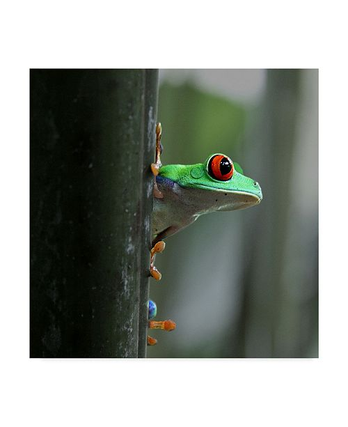 "Trademark Global Dana Brett Munach 'Red Eyed Tree Frog' Canvas Art - 14"" x 14"" x 2"""