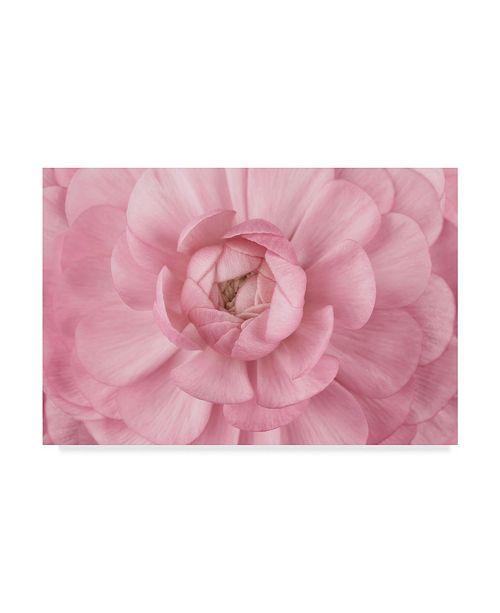 "Trademark Global Cora Niele 'Pink Flower Petals' Canvas Art - 19"" x 12"" x 2"""