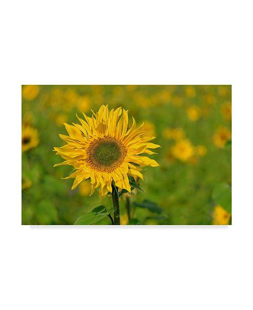 "Trademark Global Cora Niele 'Sunflower' Canvas Art - 47"" x 30"" x 2"""