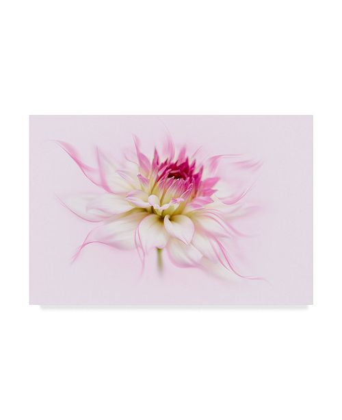 "Trademark Global Cora Niele 'Dancing Flower Dahlia' Canvas Art - 47"" x 30"" x 2"""