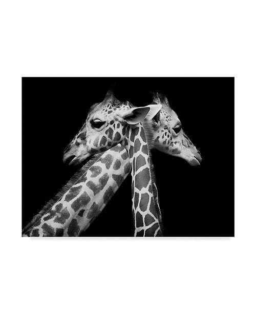 "Trademark Global David Williams 'Love Giraffes' Canvas Art - 47"" x 2"" x 35"""