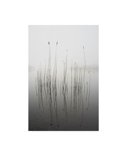 "Trademark Global David Ahern 'Silence Grass' Canvas Art - 22"" x 2"" x 32"""
