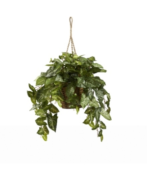 Nature sure has a lot of subtle beauty, doesn\\\'t it? And this hanging basket Nepthytis plant personifies that to the utmost. With it\\\'s many shades of green and full cascade of angled leaves, this is an ideal way to bring nature inside, whether it\\\'s for a home or office. Complete with a beautiful hanging basket, it\\\'ll never need sun or water, and will last a lifetime. Makes a fantastic gift as well.