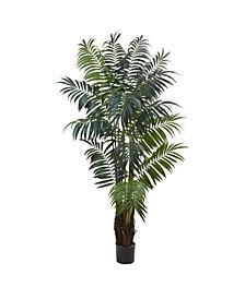7.5' Bulb Areca Palm Tree