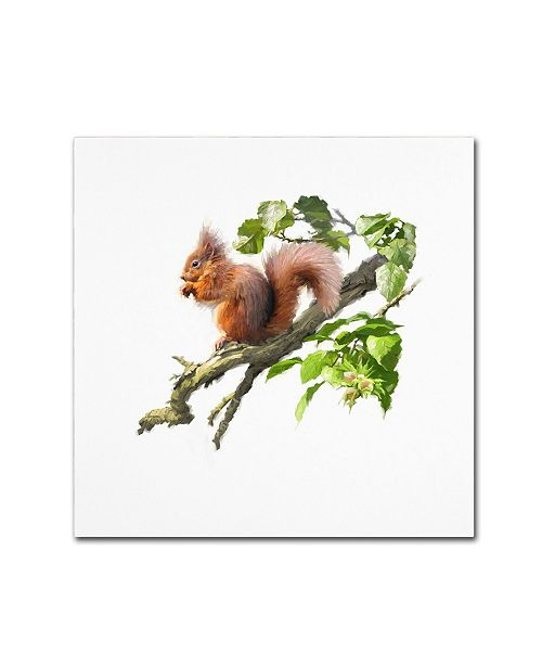 "Trademark Global The Macneil Studio 'Red Squirrel' Canvas Art - 35"" x 35"" x 2"""